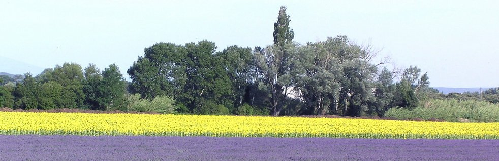 Magnifique paysage en Provence